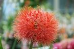 Nový Zéland - Auckland: Botanická zahrada